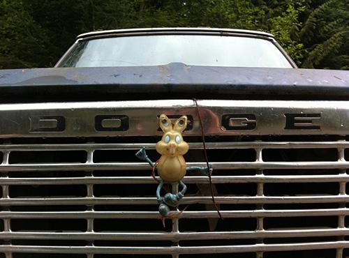 Dodge Bunny