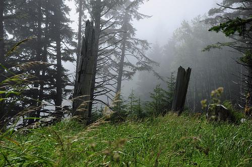 Totem poles, Skedans, by popejon2