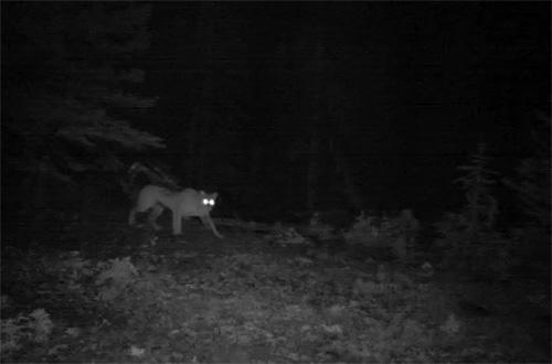 A Wild Year, Banff National Park, 2011